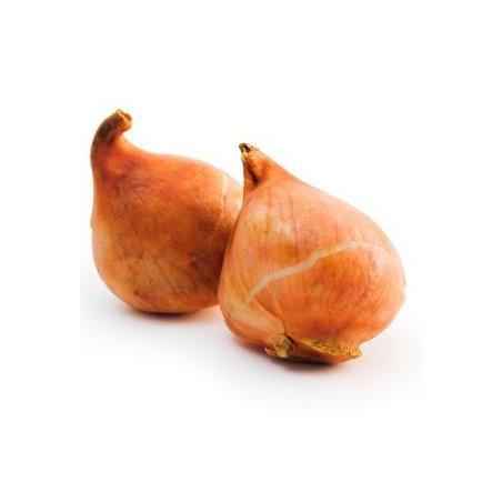 Тюльпан Darwiorange
