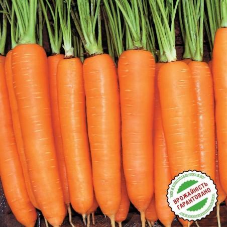 Морковь Колтан F1, нантского типа